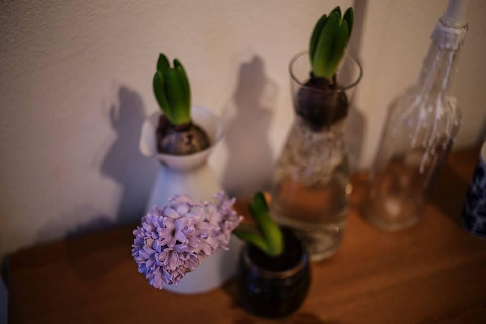 hyacintmannen